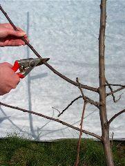 Pruning - Branching