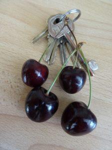 Cherry Kordia fruit